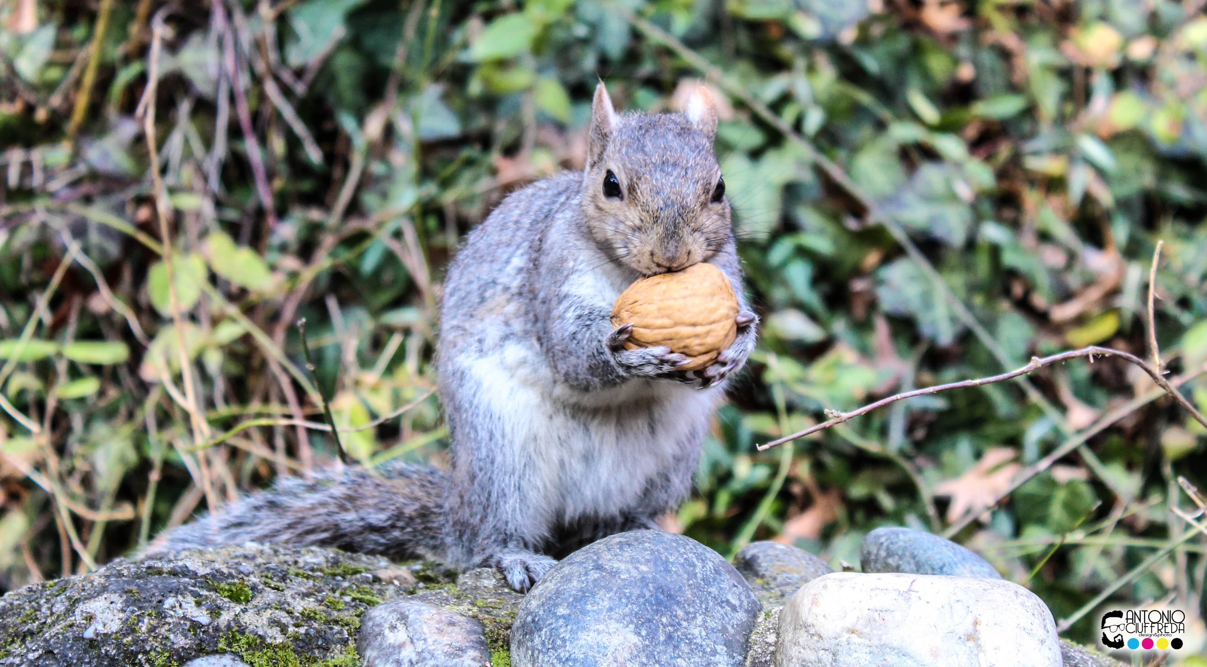 scoiattolo 2-min